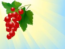 Free Red Currant Royalty Free Stock Photos - 9814978