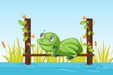 Free Frog Stock Image - 9815561
