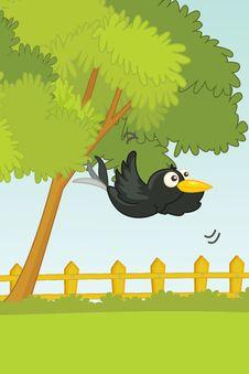 Free Bird Stock Images - 9816314