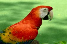 Free Scarlet Macaw Stock Images - 9817254