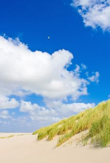 Free Beach Royalty Free Stock Image - 9817546