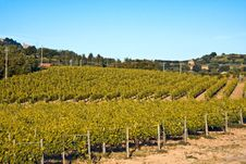 Free Vineyards Stock Images - 9818184