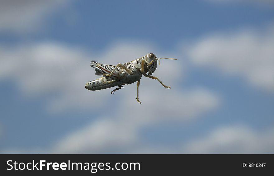 Grasshopper in sky.