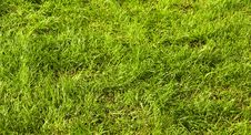 Free Grass Royalty Free Stock Photography - 9820857