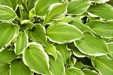 Free Green Leaves Stock Photos - 9820893