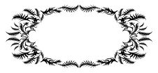 Free Style Fern. The Average Frame. Royalty Free Stock Image - 9821406