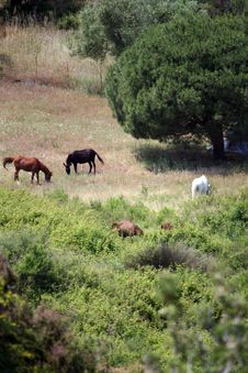 Free Horses In The Meadow Stock Photos - 9822433