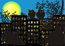 Night Cats Royalty Free Stock Photography
