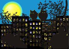 Free Night Cats Royalty Free Stock Photography - 9822977