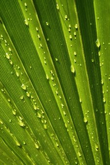 Free Palm Leaf Stock Photography - 9823612