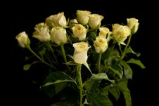 Free Punch Of Roses Royalty Free Stock Photos - 9823688