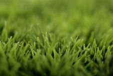Free Grass Stock Image - 9826131