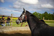 Free Horsemanship_01 Stock Photography - 9826172
