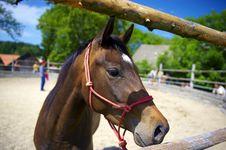 Free Horsemanship_02 Stock Image - 9826181