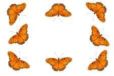 Free Gulf Fritillary Butterfly Background Royalty Free Stock Image - 9827276