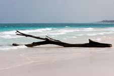 Free Tulum White Beach In Mexico Royalty Free Stock Photo - 9827605
