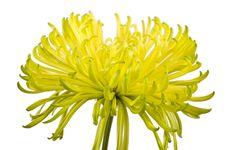 Free Macro Shot Of Beautiful Flower Stock Photography - 9829432