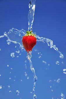 Free Strawberry Stock Photo - 9829440