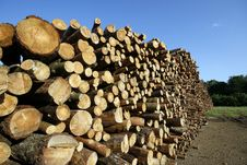 Stack Of Wood Stock Images
