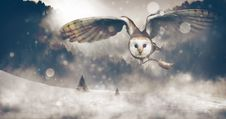 Free Owl Hunt Mouse Royalty Free Stock Photography - 98221787