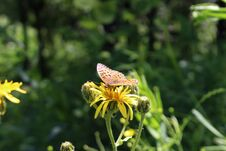 Free Butterfly On The Flowers Stock Photos - 98248683
