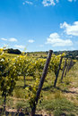 Free Vineyards Stock Images - 9837444
