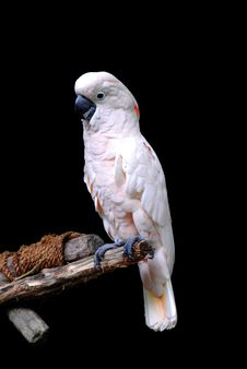 Free Parrot Stock Image - 9832191