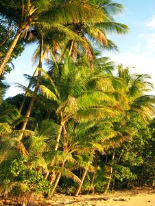Free Tropical Golden Palm Beach Stock Photo - 9832350