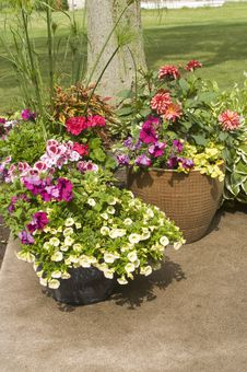 Free Pots With Various Blooming Plants Stock Photo - 9832870