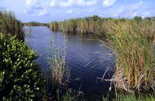 Free Florida Everglades Stock Photography - 9834622