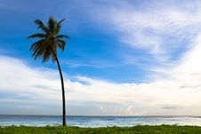 Free Palm On The Beach Island Royalty Free Stock Image - 9836246