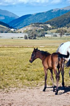 Free A Foal Royalty Free Stock Photography - 9837437