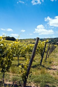 Free Vineyards Stock Images - 9837444