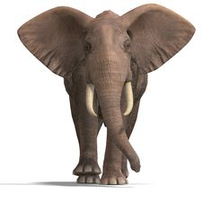 Free Huge Elephant Stock Photo - 9838160