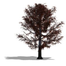 Free Oak Tree Royalty Free Stock Photo - 9838215