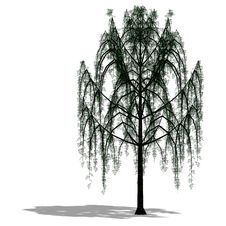 Free 3D Render Of A Tree Stock Photo - 9838230