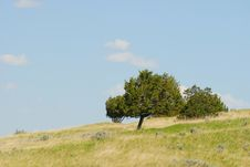 Free Tree On A Hill Stock Image - 9838671