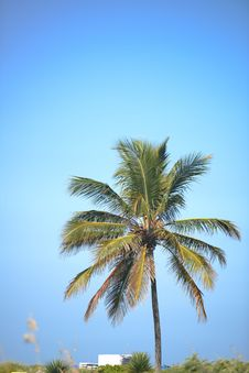 Free Palm Tree Against Blue Sky Stock Photo - 98351940