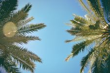Free Retro Look At Palm Trees Stock Photography - 98351962