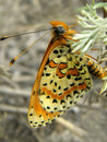 Free Butterfly. Macro Royalty Free Stock Images - 9842959