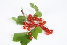 Free Currant Red Royalty Free Stock Photography - 9840557