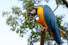 Macaw On The Tree Royalty Free Stock Images