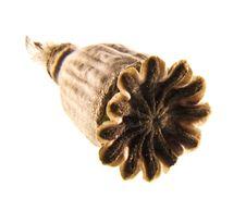 Free Poppyhead Stock Image - 9842881
