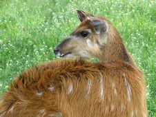 Free Marsh Deer Royalty Free Stock Image - 9843026