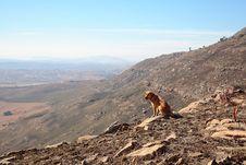 Free Dog On Mountain Stock Photo - 9845480