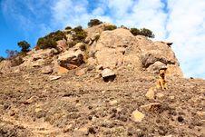 Free Dog On Mountain Royalty Free Stock Photos - 9845538