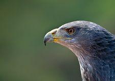 Chili Eagle Stock Images