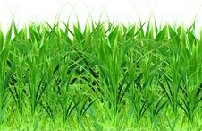 Free Isolated Grass Stock Photo - 9847460