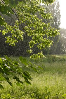 Free Spring Rain Royalty Free Stock Images - 9847499