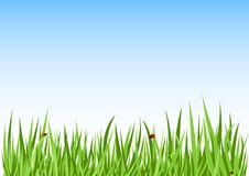 Free Grass Green Background Royalty Free Stock Photo - 9847745